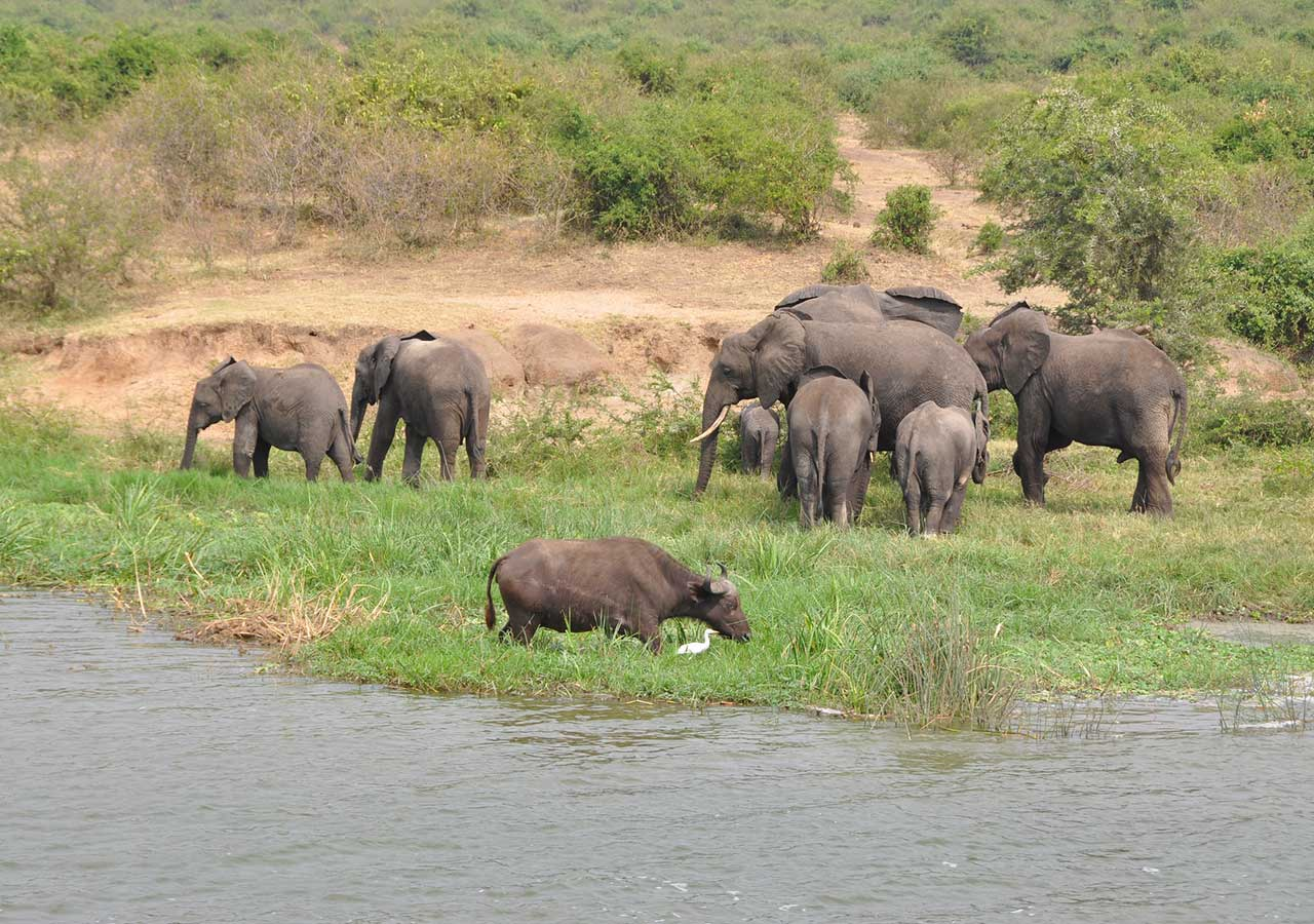 uganda safaris uganda wildlife safari
