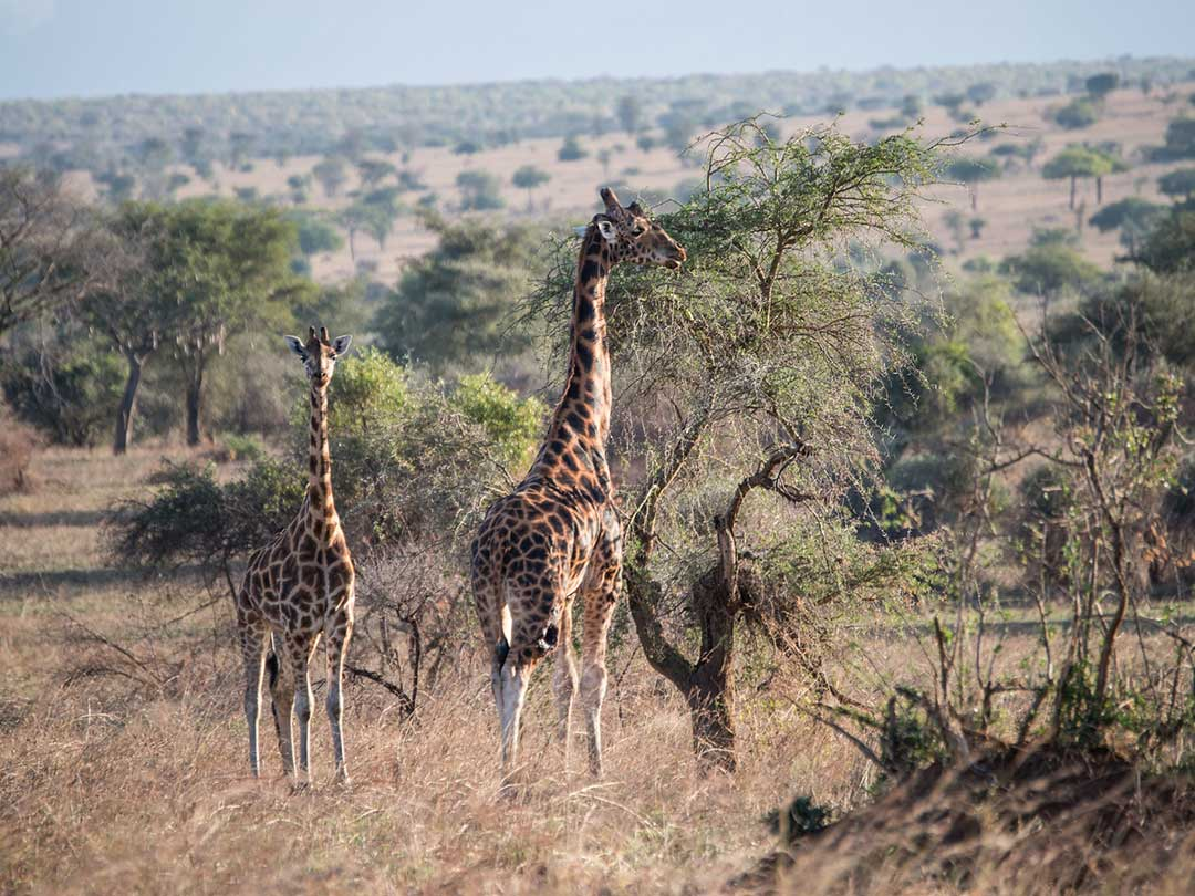 kidepo-valley-national-park1
